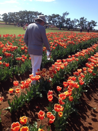 Frank tiptoe-ing through the tulips