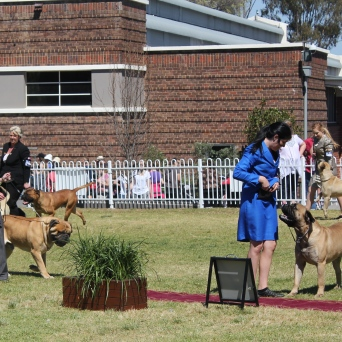 Unlike ours, the Show also had many dog and cat exhibitions, too.